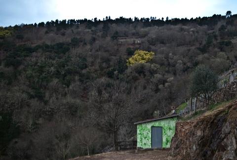 reforestando na ribeira sacra caseto