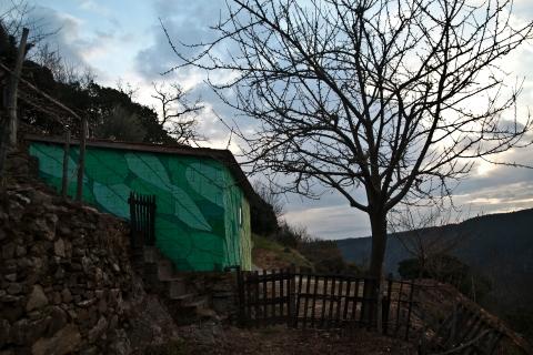 reforestando na ribeira sacra vinha