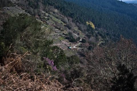 vistas reforestando na ribeira sacra