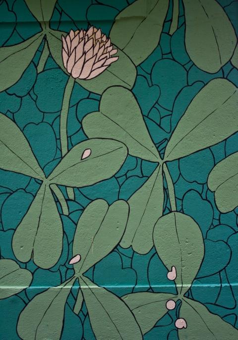 reforestando trilolium kaldarte 2015 firma doaoa