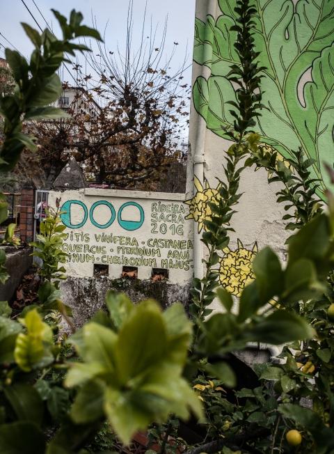 10-doa-oa-reforesta-peares