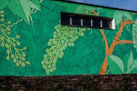 portomarin-det-reforestando-ribeira-sacra-doa-4