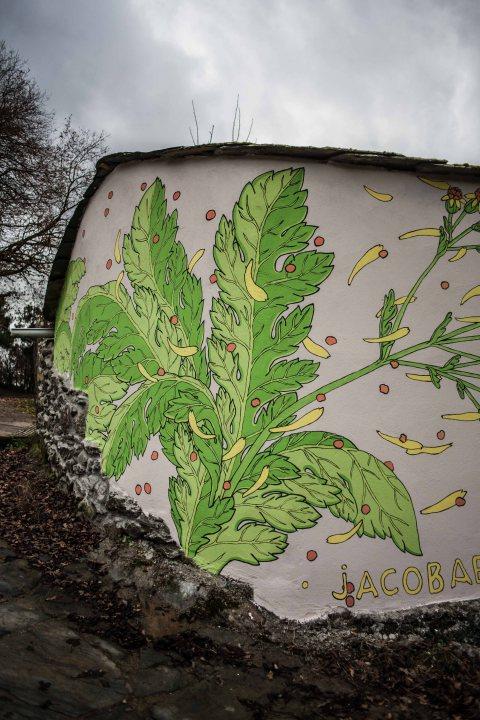 reforestando-ribeira-sacra-doa-ocampo-paradela-3
