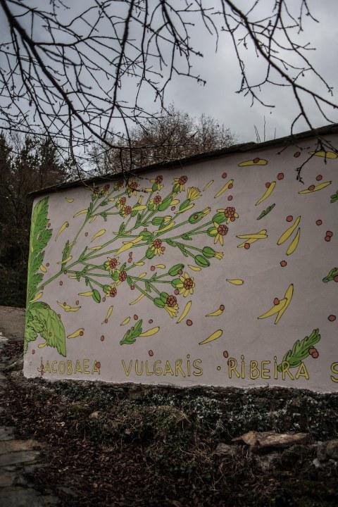 reforestando-ribeira-sacra-doa-ocampo-paradela-7
