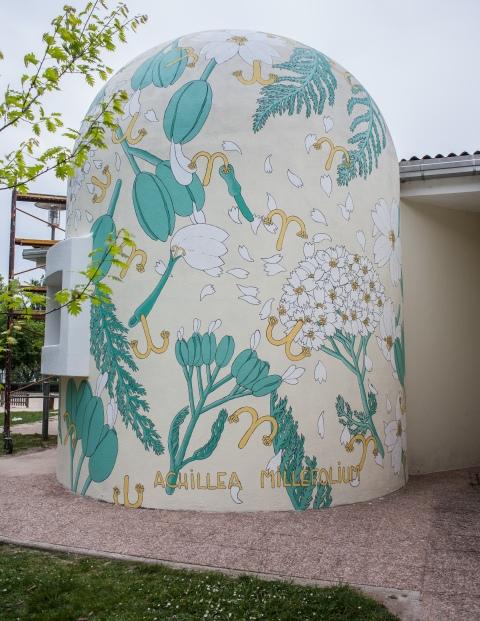 achillea millefolium reforestando doa oa