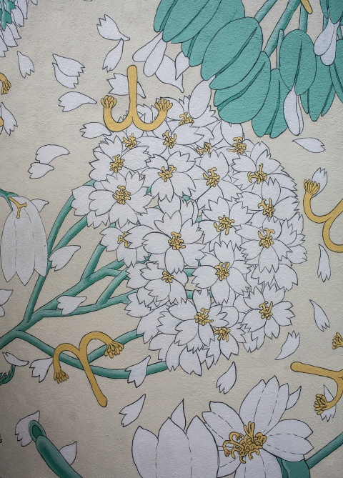 reforestando achillea millefolium doa ocampo 8