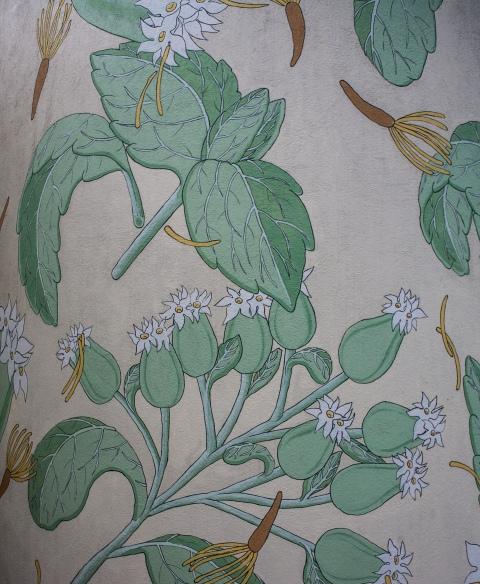 stevia rebaudiana detalle reforestando doa ocampo